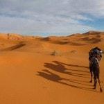 Camel Caravan Sahara Desert_Source NOSADE