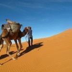 Camel tour camel trekking caravan Erg Chebbi Sahara desert_Source NOSADE