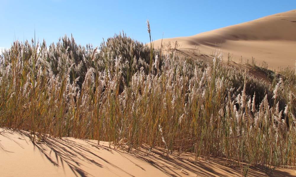 Desert Oasis Sahara Morocco_Source NOSADE