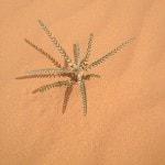 Desert nature flora_Source NOSADE
