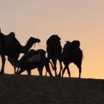 Karawane Sahara Wüste_Source NOSADE