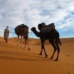Morocco Desert Camel Trekking Merzouga Erg Chebbi_Source NOSADE