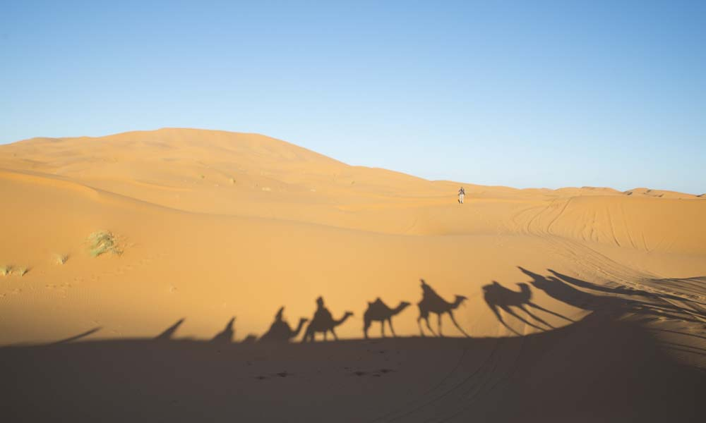 Nosade-Wüste-Kamele-Schatten_Source Katbuzz