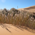 Oasis Sea of Sands Erg Chebbi Morocco Sahara Desert_Source NOSADE