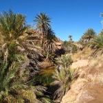 Palm trees Saf Saf Oasis Morocco_Source NOSADE