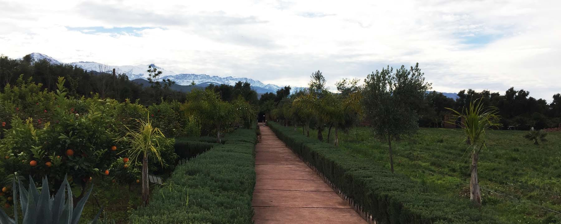 paradis-du-safran-marrakech_source-nosade