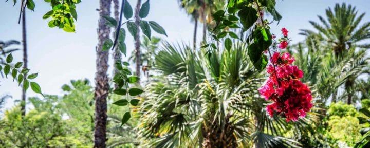 Yoga Green Marrakech2_iStock 82993773