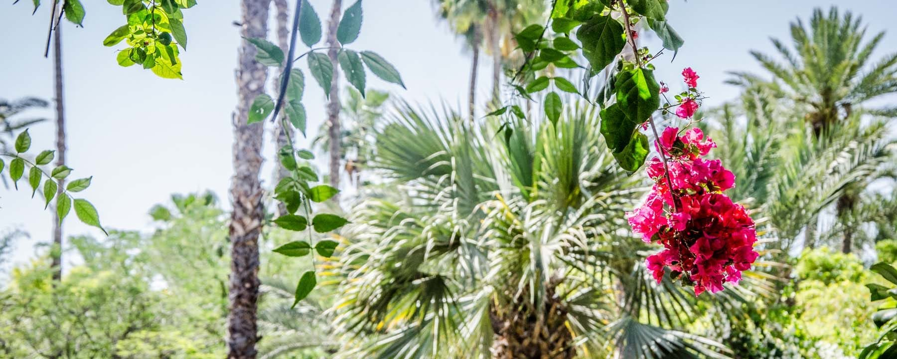 Yoga Green Marrakech_iStock 82993773